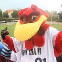 USCGamecocks :: University of South Carolina-Columbia