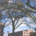College :: Washington Adventist University