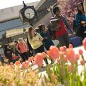 Hofstra Tulips :: Hofstra University