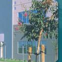 College building :: Heald College-Roseville