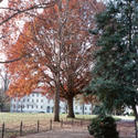tree :: Emory University